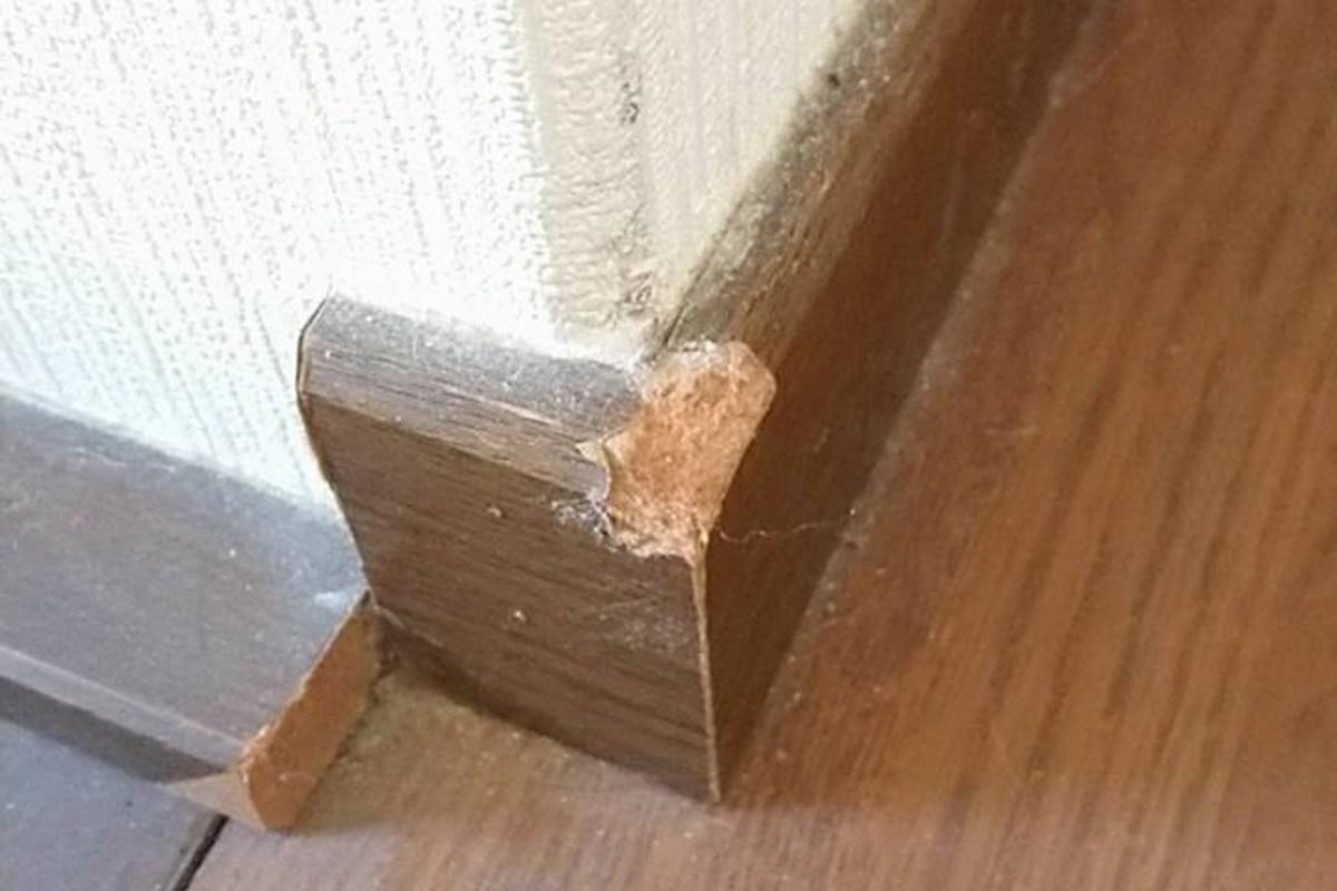子犬は思った以上に壁紙を破り 床のクロスを剥がす生き物 犬めいと