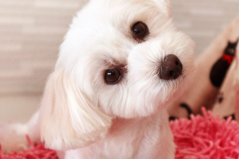 たくさん犬に話しかけることで 犬の感情を読み取る能力は向上する