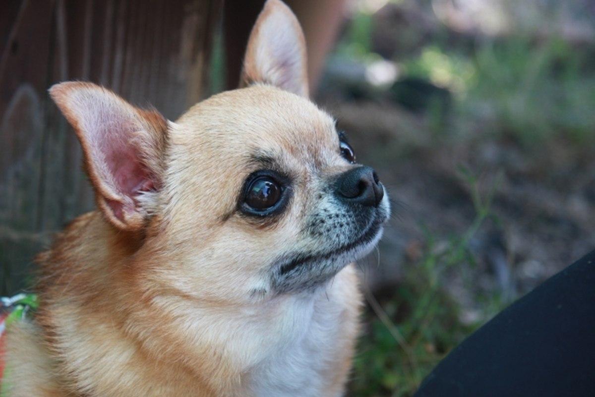 老 犬 食べ ない 余命 Pickup - だめぽアンテナ